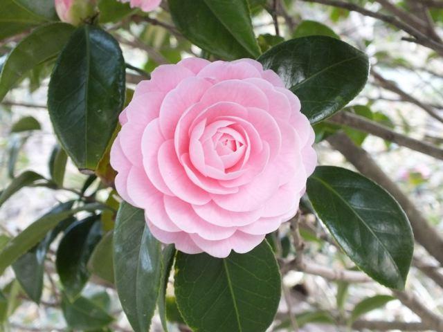 春色ピンク_f0144003_21303376.jpg