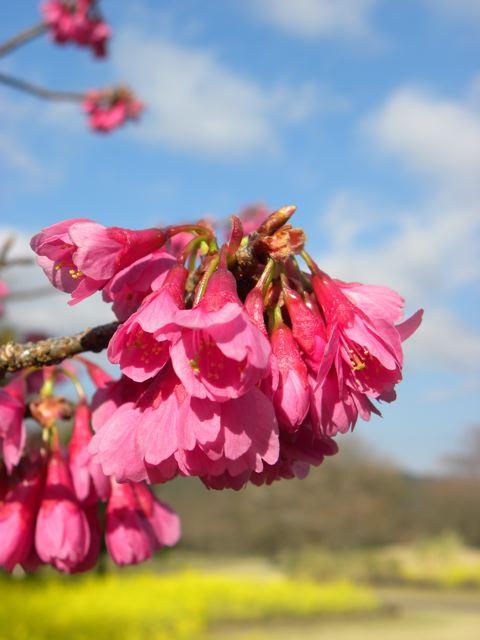 春色ピンク_f0144003_21484662.jpg
