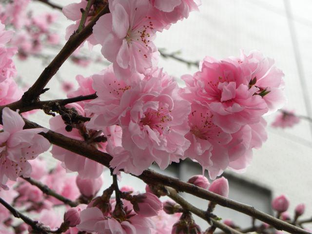 春色ピンク_f0144003_217439.jpg