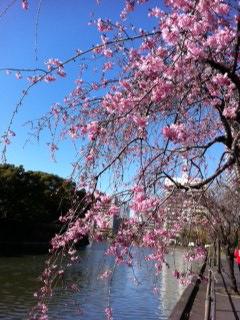 春風_c0197505_165386.jpg