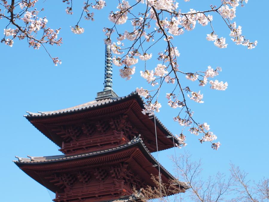 ... 、増上寺を訪れてみました