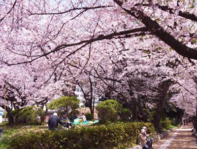 桜日和_e0130607_17505095.jpg