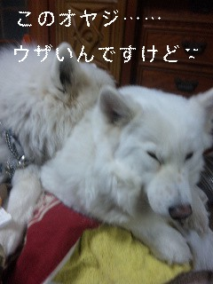 la figlia特集_d0148408_1124324.jpg