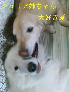 la figlia特集_d0148408_1124326.jpg
