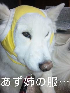 la figlia特集_d0148408_1124355.jpg