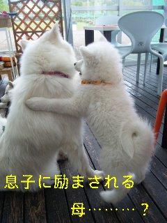la figlia特集_d0148408_1124382.jpg