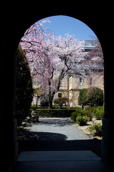 京の花だより 京都府庁_e0048413_1748047.jpg