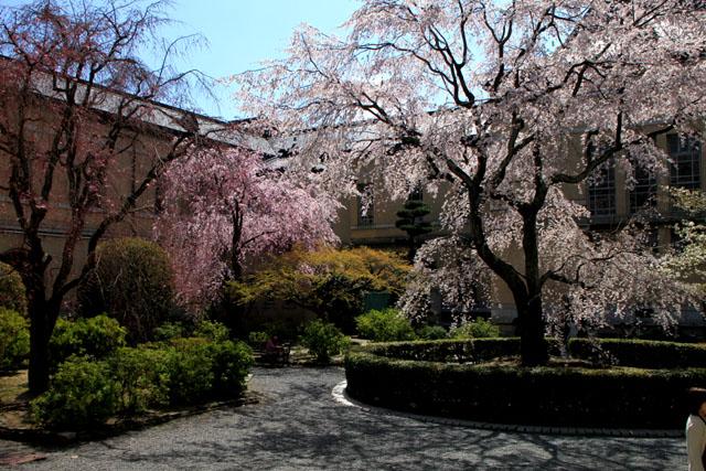 京の花だより 京都府庁_e0048413_17481260.jpg