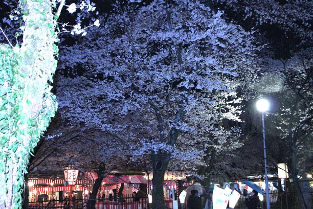 京の花だより 平野神社夜ざくら_e0048413_23103760.jpg