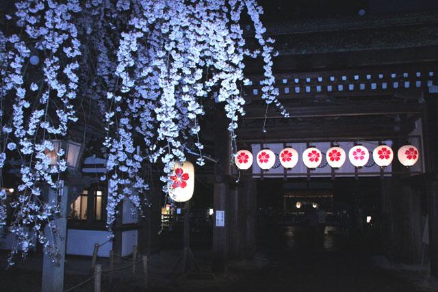 京の花だより 平野神社夜ざくら_e0048413_2310377.jpg