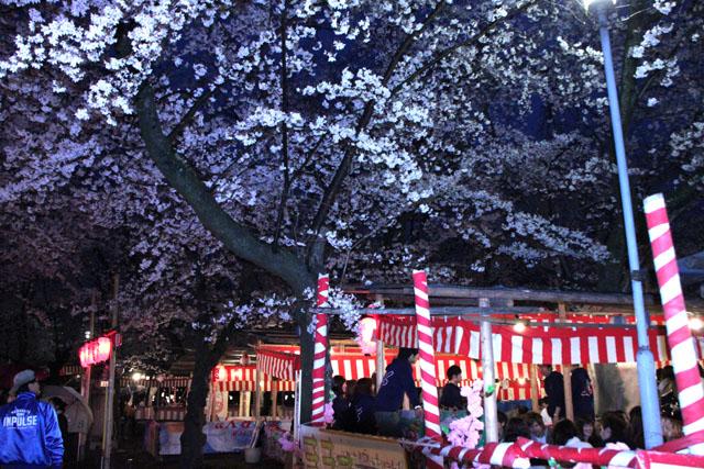 京の花だより 平野神社夜ざくら_e0048413_23104825.jpg