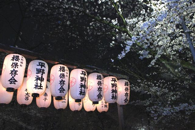 京の花だより 平野神社夜ざくら_e0048413_2394067.jpg