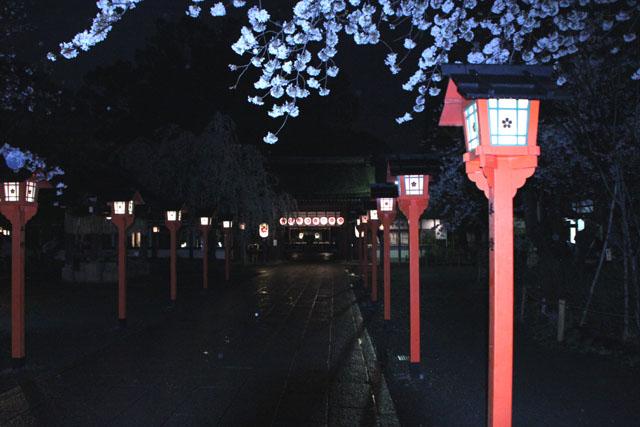 京の花だより 平野神社夜ざくら_e0048413_2395249.jpg
