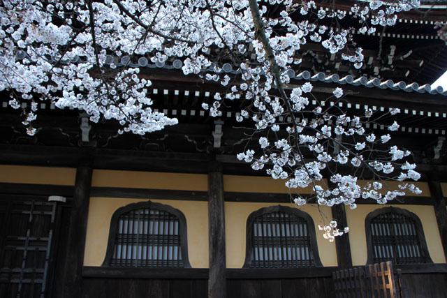 京の花だより 南禅寺_e0048413_9523850.jpg