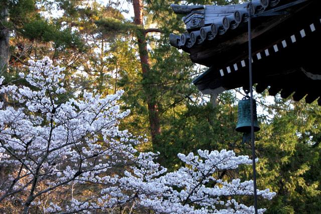 京の花だより 南禅寺_e0048413_9525071.jpg