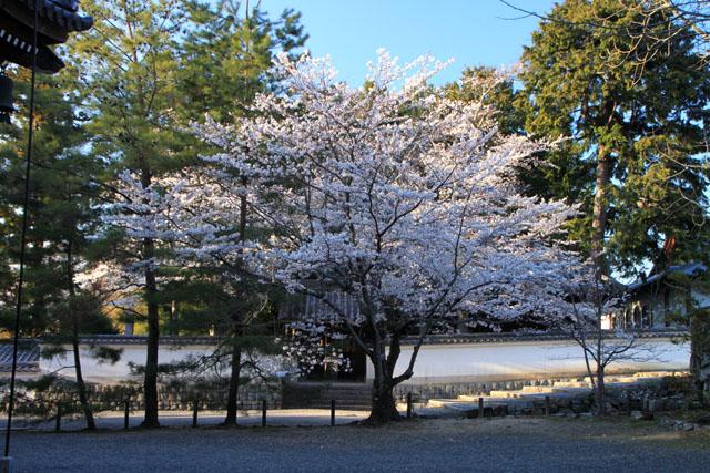 京の花だより 南禅寺_e0048413_953045.jpg