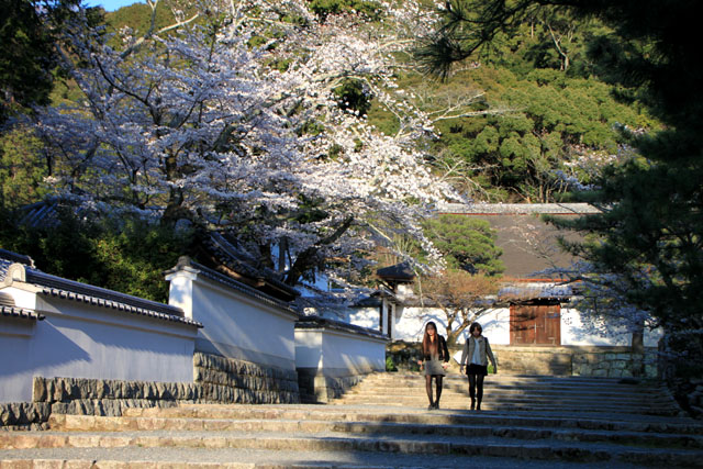 京の花だより 南禅寺_e0048413_9531956.jpg