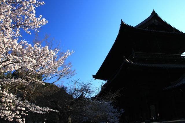 京の花だより 南禅寺_e0048413_9533283.jpg