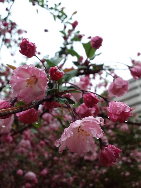 雨ふって地固まる_a0133915_2463176.jpg