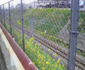 春の訪れ_c0146921_1540185.jpg