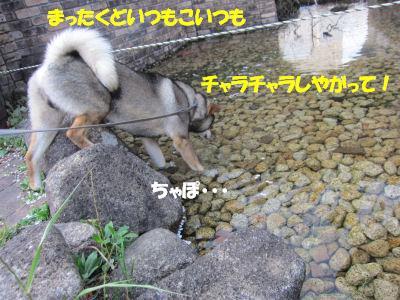 f0143123_2012615.jpg