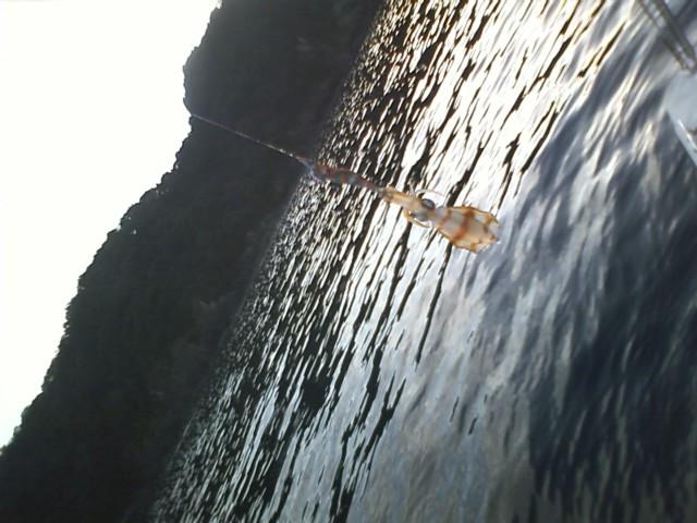 【たまりんのボートエギング】 ビデオ2連発!_a0132631_11133986.jpg