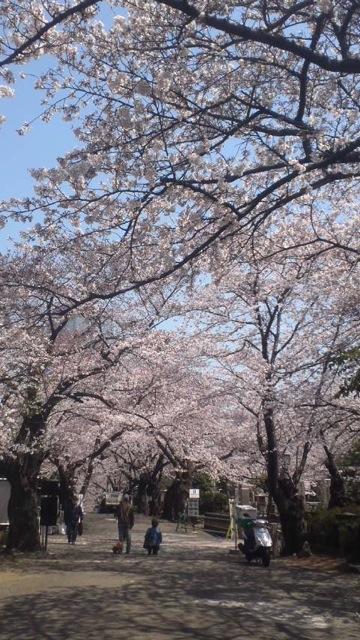 桜の木の下で_c0099133_11205673.jpg