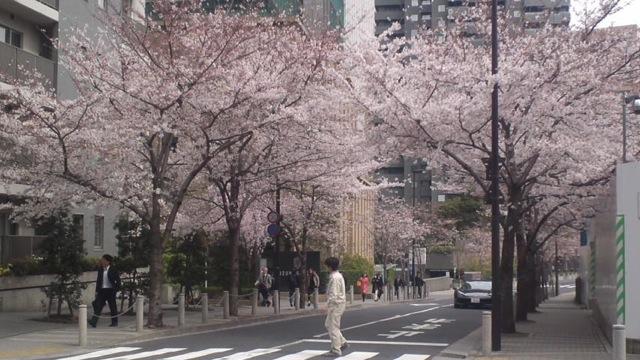 桜の木の下で_c0099133_11211765.jpg
