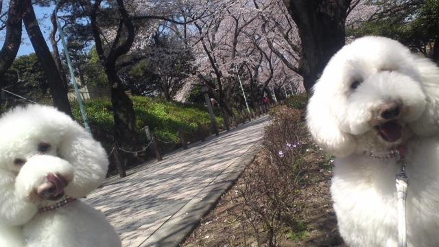 桜の木の下で_c0099133_1125747.jpg