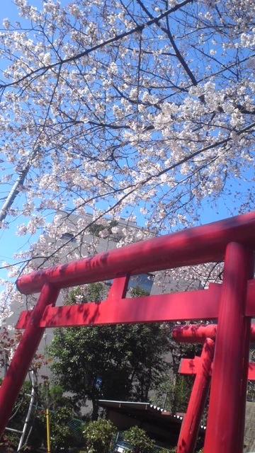 桜の木の下で_c0099133_11265724.jpg