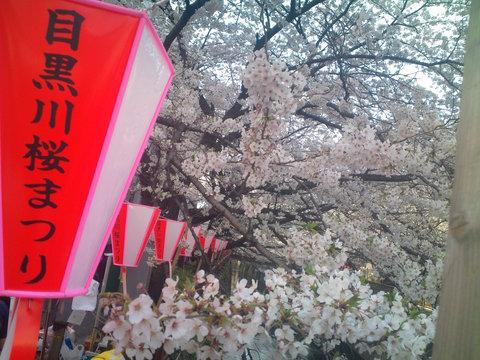 中目黒桜前線2011_e0173239_13502069.jpg