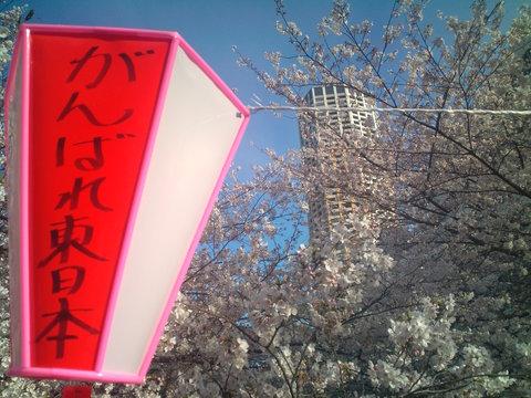中目黒桜前線2011_e0173239_13514051.jpg