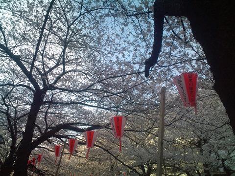 中目黒桜前線2011_e0173239_13582965.jpg