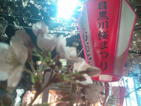 中目黒桜前線2011_e0173239_1414568.jpg