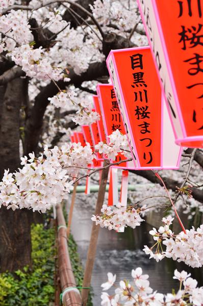 目黒川桜まつり_a0003650_214402.jpg