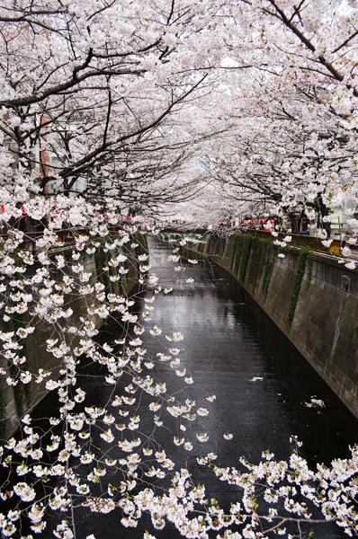 目黒川桜まつり_a0003650_21441397.jpg