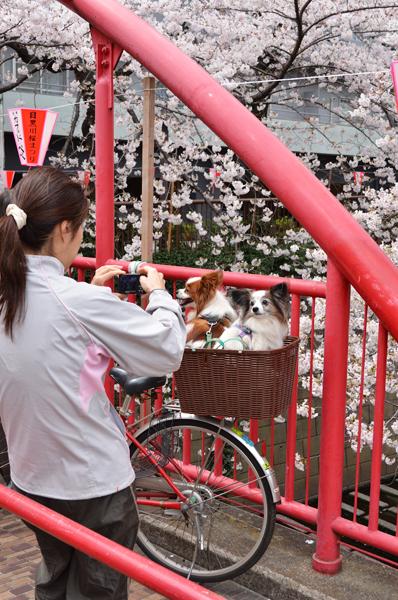 目黒川桜まつり_a0003650_21465295.jpg