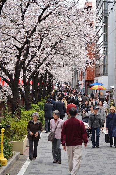 目黒川桜まつり_a0003650_214893.jpg