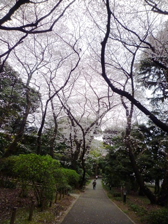 お花見…_b0093660_2240446.jpg