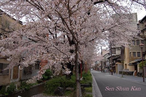 賀茂川の桜  2011年4月_a0164068_22212851.jpg