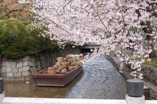 賀茂川の桜  2011年4月_a0164068_22231020.jpg