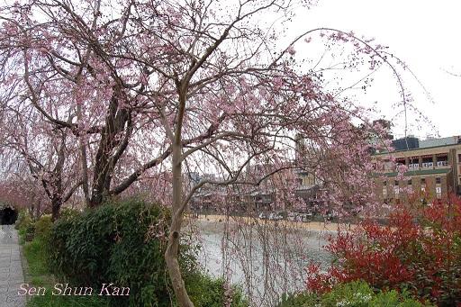 賀茂川の桜  2011年4月_a0164068_22235084.jpg