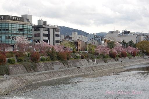 賀茂川の桜  2011年4月_a0164068_22322440.jpg