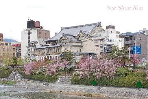 賀茂川の桜  2011年4月_a0164068_2232390.jpg