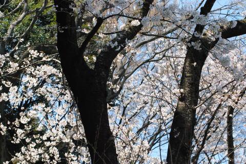 春いろ_d0091671_10494383.jpg