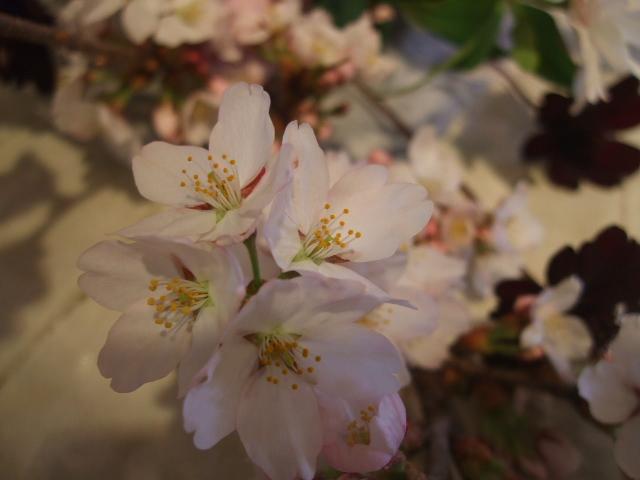 オークリーフ花の教室(石井さんの作品)_f0049672_1801648.jpg
