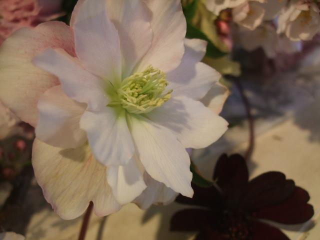 オークリーフ花の教室(石井さんの作品)_f0049672_180244.jpg
