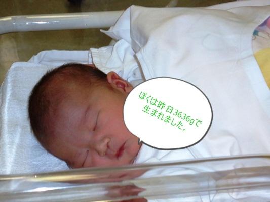 生まれました。_a0199979_1665563.jpg