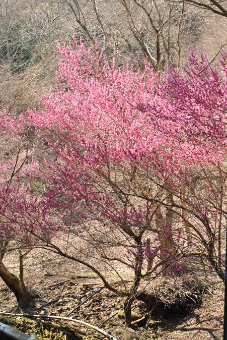 春のいぶき_b0194880_1463492.jpg