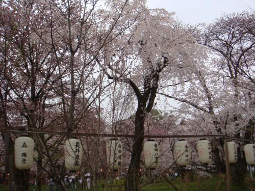 桜(その④)_f0201286_107216.jpg